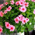 điều trị bằng cây hoa