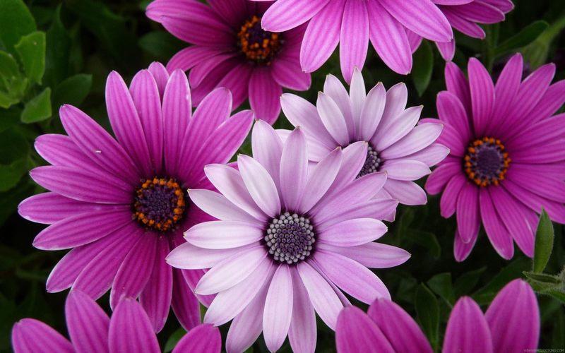cây hoa và cuộc sống