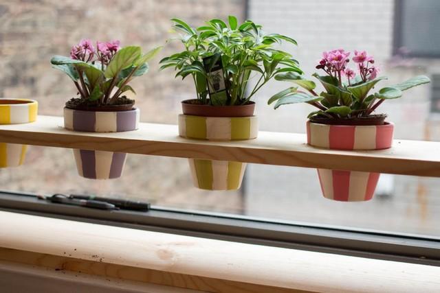Chậu hoa bên cửa sổ